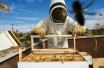 KAZAKHSTAN EXPORTS HONEY TO CHINA