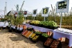 Intensive gardening areas are expanding in South Kazakhstan region