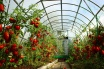 Thermal greenhouses were constructed in Almaty