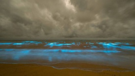 'Sea sparkle' algae lights up Tasmanian beach