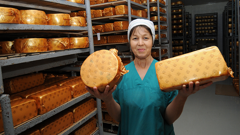 Cheese factory in Zhambyl region will increase export by 40%