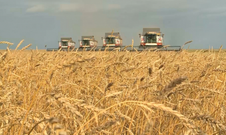 Kazakhstan Increasing Export of Wheat to Foreign Countries