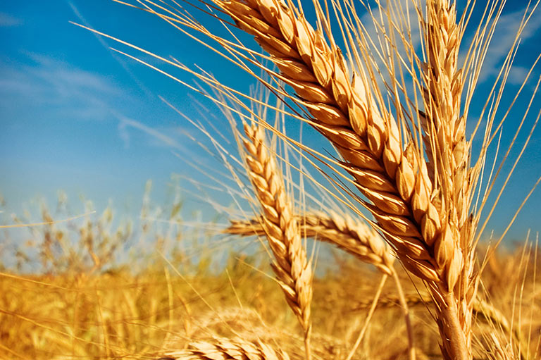 Kazakhstan is one of the World's Leading Exporters of Grains