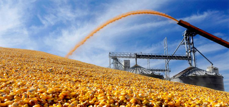 Kazakhstan Increases Volume of Grain Export