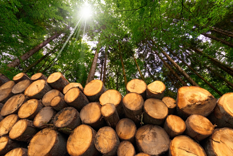 Timber Processing Cluster to Be Established in North Kazakhstan
