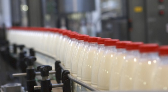 Camel milk Shubat and mare's milk Kymyz processing factory is being built in Turkestan