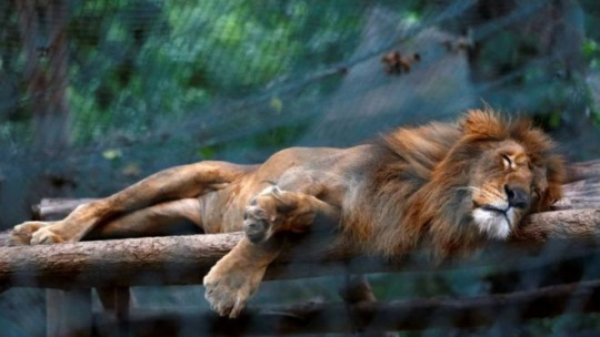 Animals go hungry in Venezuela zoos due to shortages