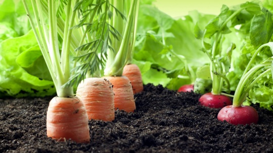 Organic farming is being actively developed in Kazakhstan