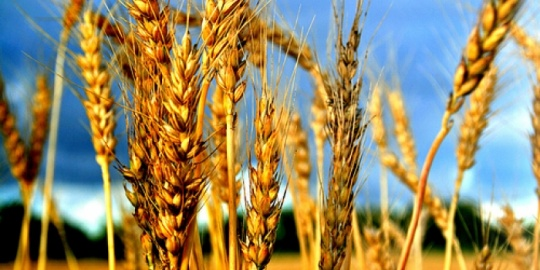 Kazakhstan exported more than 100,000 tonnes of grain to Iran in 10 months of 2017