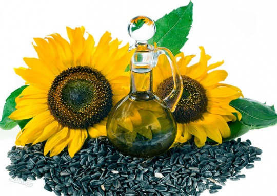A new sunflower seeds processing plant has been launched in Kostanay region