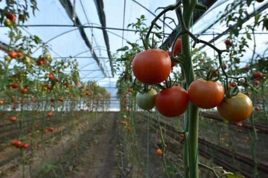 New technologies in agriculture are actively introduced in the Turkestan region