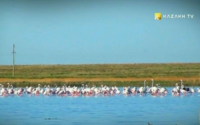 Birds of Kazakhstan lakes
